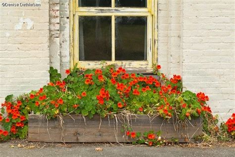 cascading flowers for window boxes pin by lora bowers on window boxes pinterest