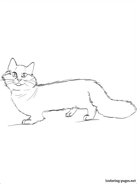 munchkin cat coloring page coloring pages