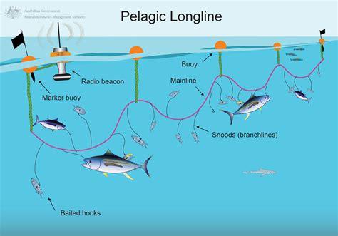 longlining australian fisheries management authority