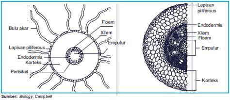 laporan praktikum struktur jaringan tumbuhan