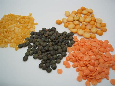 what are lentils 20 facts about lentils