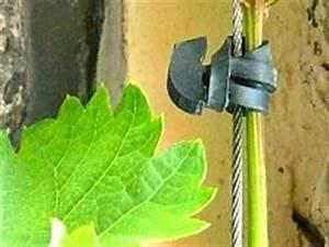 Drahtseil An Wand Befestigen : befestigung von rankhilfen und pflanzen ~ Markanthonyermac.com Haus und Dekorationen