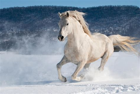 horse snow running dierks andrew powder photograph 5th uploaded november which