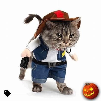 Cat Dog Costumes Costume Funny Cowboy Pet
