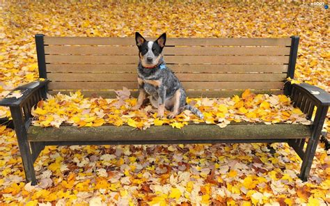 leaf autumn dog park bench dogs wallpapers