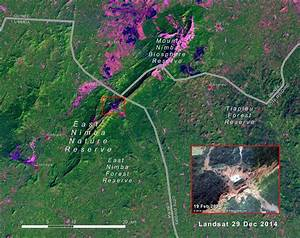 The forest ecosystem of the East Nimba Nature Reserve ...