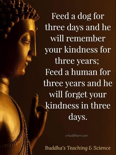 Here, you will get 10 best health quotes by buddha, which will help you to visualize your life from a different. Pin by Lyn Maloney Author & Poet ☘️ on Positive Quotes   Buddhism quote, Wisdom quotes, Buddhist ...