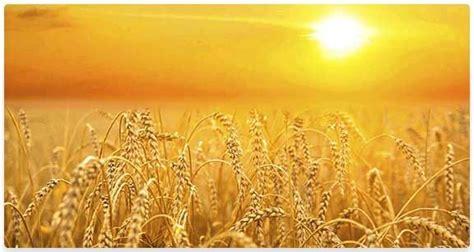 Plentiful-Harvest-1 - DAILY PRAYERS