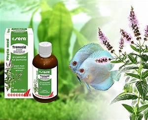 Aquarium Zubehör Günstig : aquarium zubeh r online g nstig kaufen bei aqua ~ Frokenaadalensverden.com Haus und Dekorationen