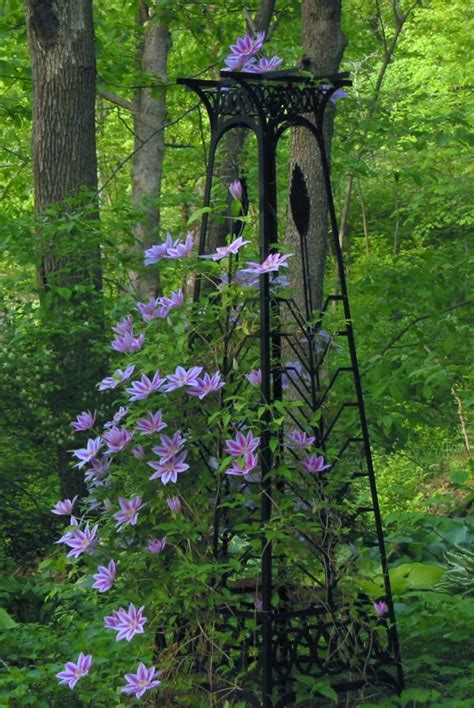 Clematis Trellis by I Done This Exact Thing In My Garden Planted With A