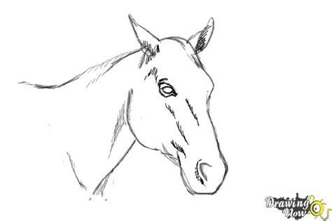 draw  horse head drawingnow
