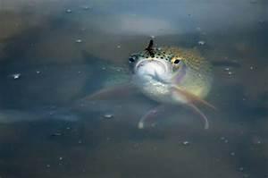 FishFest! | Distinctly Montana Magazine