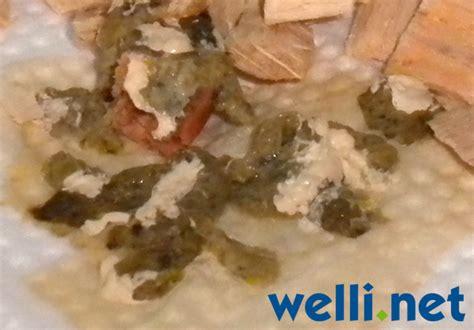 giardien bei wellensittichen wellensittich portal wellinet