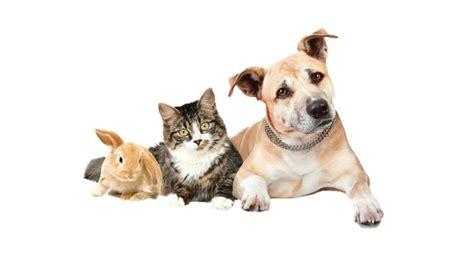 Artrose hond, behandeling - medisch Centrum voor dieren