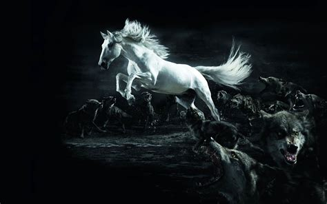 Caballos Fondos De Pantalla, Horses Wallpapers Hd