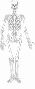 Skeleton Blank