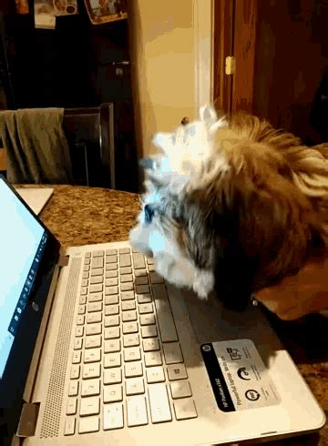 puppies dog gif puppies dog typing discover share gifs