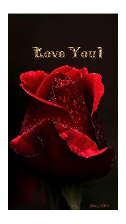 Rose Roses Gifs Dreamies Romantic Rosas Herz