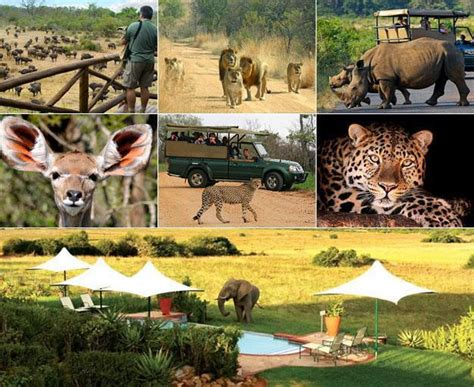 South Africa Safaris  South Africa. How To Enable Remote Access What Is A Rn Bsn. Los Angeles Rehab Center Spdr S&p 500 Etf Spy. Construction Company Accounting Software. Columbus Ohio Chiropractor Pilates Wichita Ks. Restraining Order Arizona Cash For Cars Today. Graphic Design Companies Nyc. Unique Home Decor Stores Online. Lump Sum Pension Rollover Aws Cloud Formation