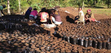 HAITI ? Coffee Growers seeking higher ground due to climate change   Comunicaffe International