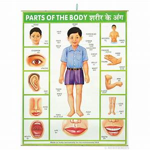 Parts Of The Body Poster   Archie Mcphee