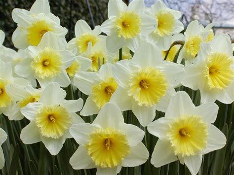 Nomi Dei Fiori Dalla A Alla Z - tutti i nomi dei fiori bulbi nomi fiori