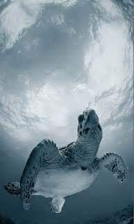 Sea Turtles Tumblr