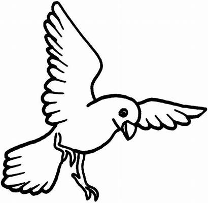 Coloring Bird Flying Pages Printable Parrot Drawing
