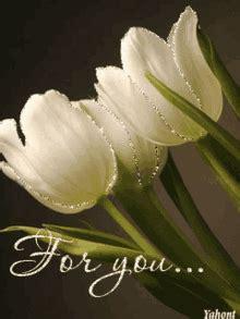 wallpaper tulip flower gif