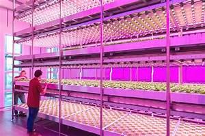 Beleuchtung Pflanzen Led : led pflanzenleuchten das gr nzeug liebt rot und blau ~ A.2002-acura-tl-radio.info Haus und Dekorationen