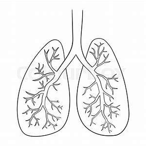 Vector Illustration Of Lungs  Doodle
