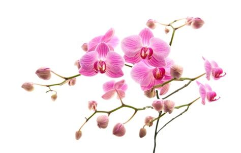 duree de vie d une orchidee en pot 301 moved permanently