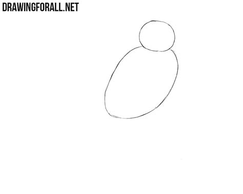 draw  northern cardinal drawingforallnet