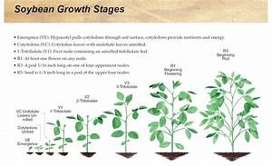 Nebraska Soybeans  Know Growth Stage Restrictions Before