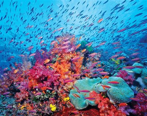 coral reef color coral reef great colors the great escape