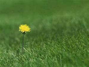 How To Control Lawn Weeds