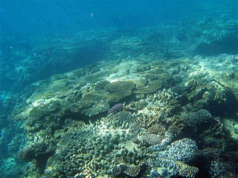 Ocean Floor Wallpapers High Quality  Download Free