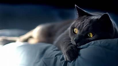 4k Cat Very Ultra Fearful Ultimate Picsmine