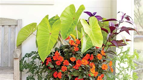 Plant A Tropical Container Garden  Southern Living