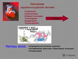 Мята для лечения гипертонии