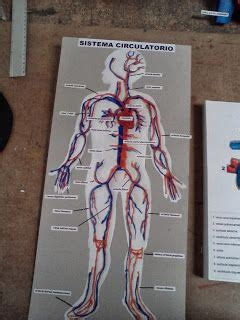 aparato circulatorio naturales pinterest