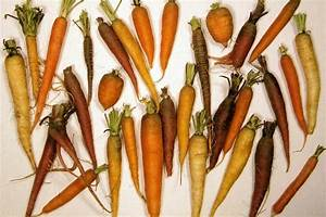 The Diversity Of Carrot Colors And Shapes