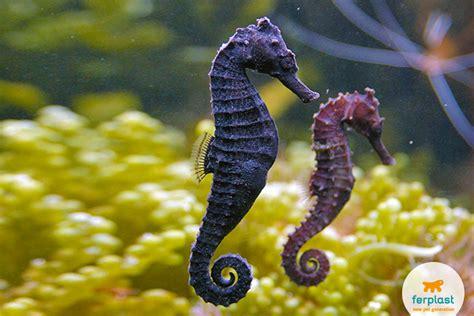 Keeping Seahorses In Aquarium, Pearls For Your Fish Tank