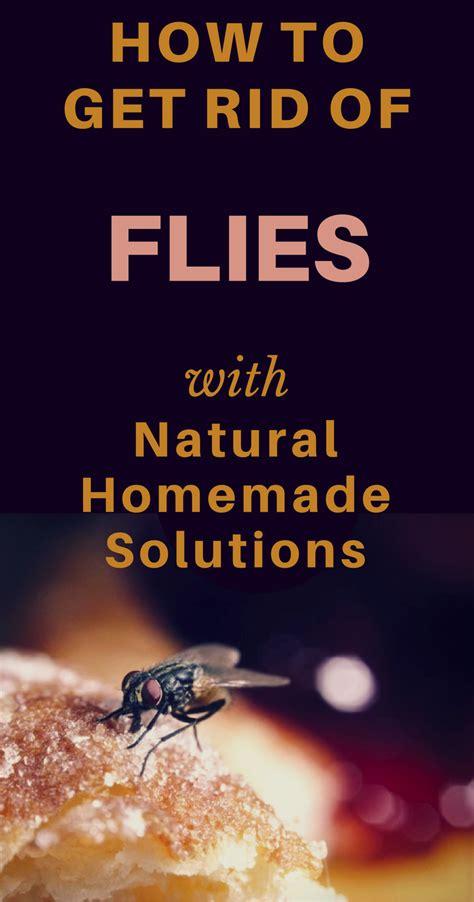 rid  flies  natural homemade solutions