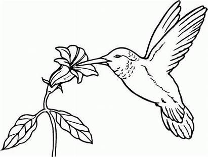 Coloring Bird Birds Printable Clipart Popular Splatter