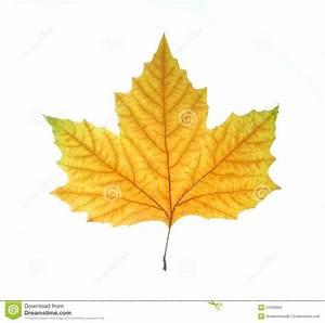 Single Fall Leaf Stock Images - Image: 21923004
