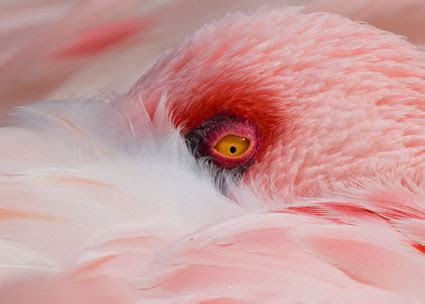 yellow coloration of the skin bird color mysteries explained national geographic
