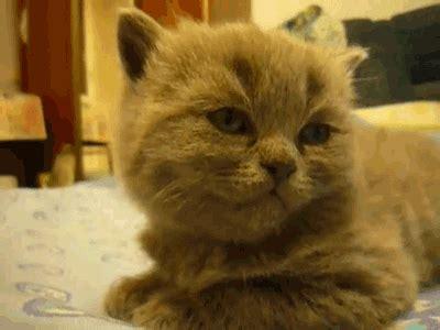 le canapé gif sur yvette dormir petit photos de chats