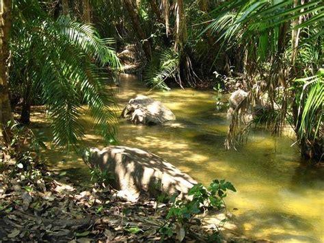 pretty scenery hidden  jungle    bottom  vf