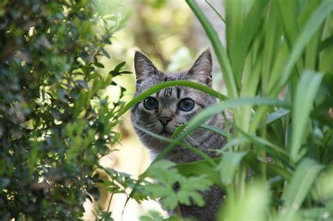 katzen aus garten vertreiben katzen vertreiben die besten hausmittel katzen vertreiben net